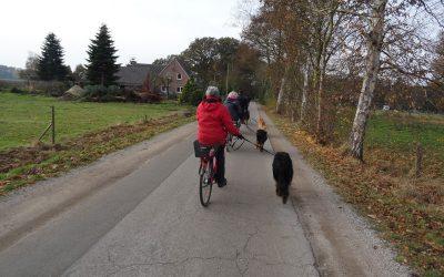 Barengo besteht Ausdauerprüfung in Delmenhorst
