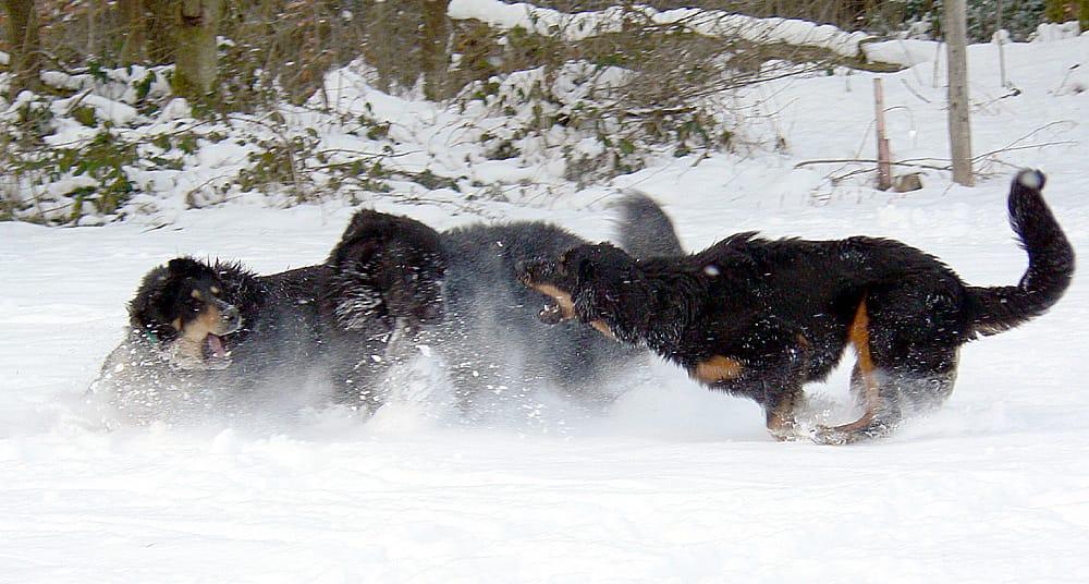 Gemeinsam_Amigo_Baika_Akasha_Winter_2005