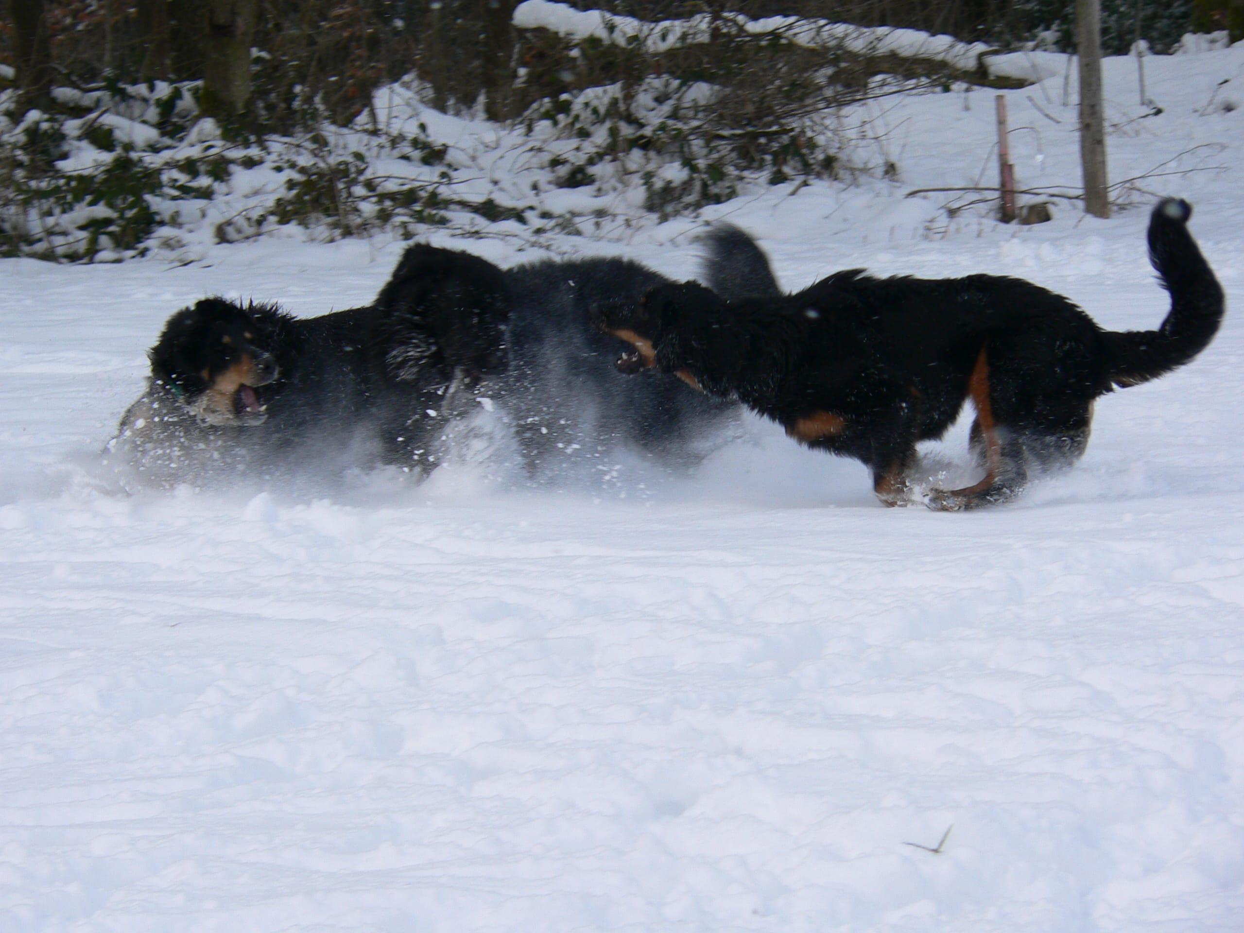 Gemeinsam_Amigo_Baika_Akasha_Winter_2005_1