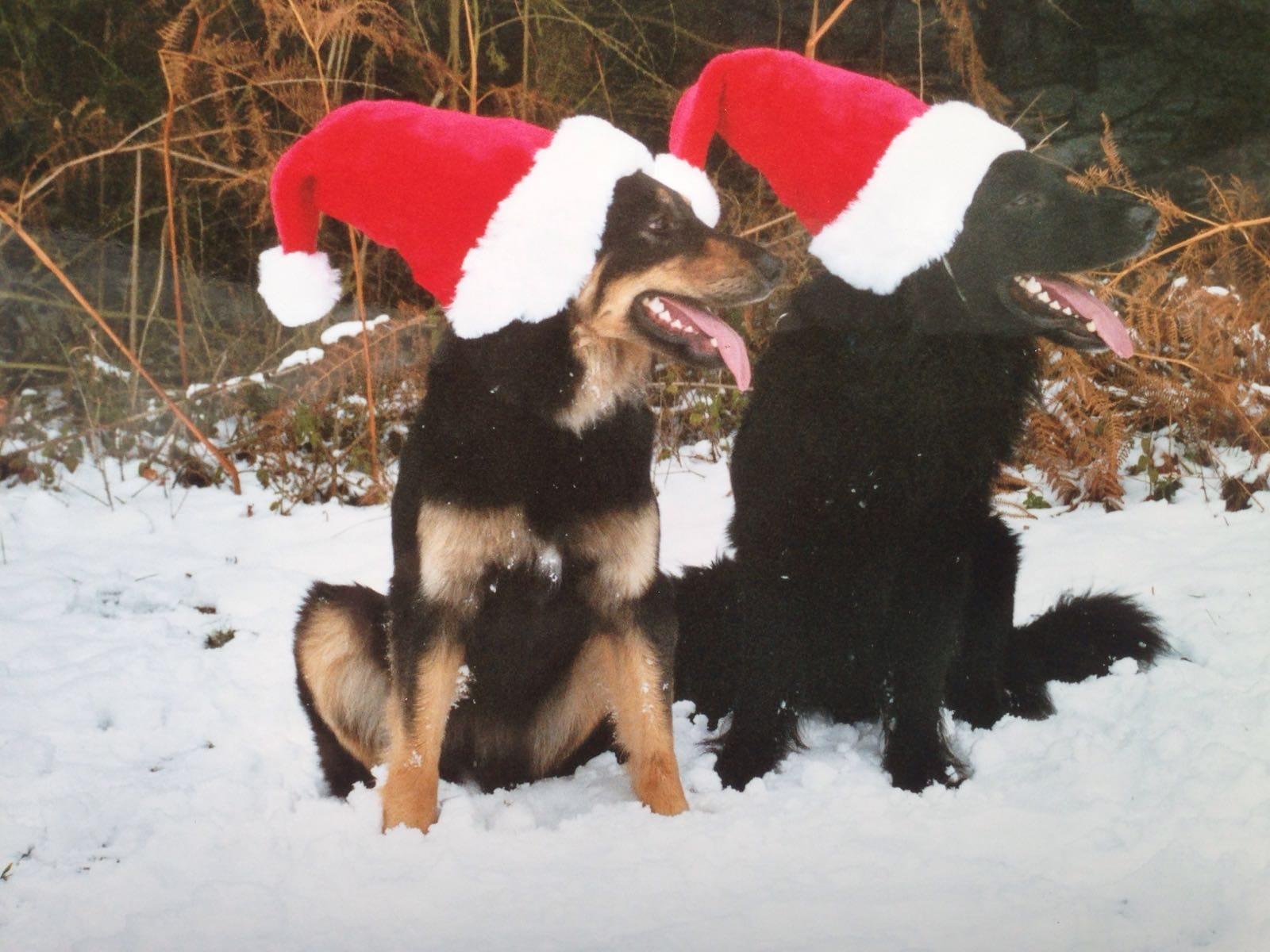 Gemeinsam_Amigo_u_Baika_Weihnachten 2003_1