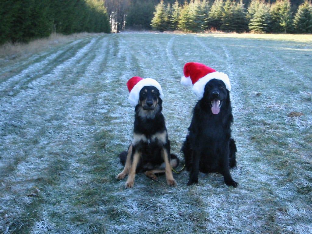 Gemeinsam_Amigo_u_Baika_Weihnachten 2003_2