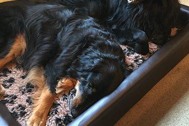 Neues Hundebett eingeweiht…